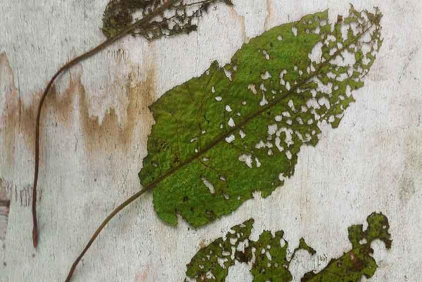 Objecten uit de natuur zoals bladeren zijn de inspiratiebron voor kunstenaar Bas Berkelmans uit Moergestel